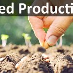 scope and importance of Seed production