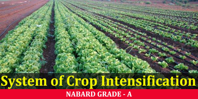 System of Crop Intensification (SCI)